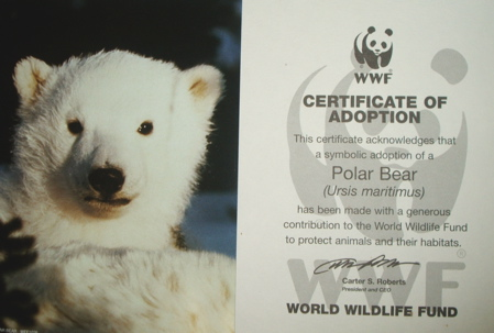 Polar bear adoption