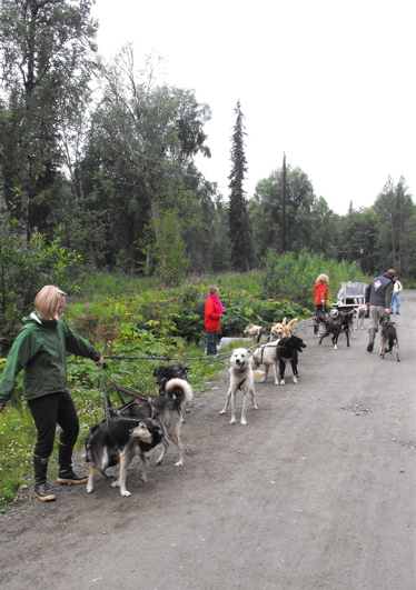 Sun Dog Iditarod kennels