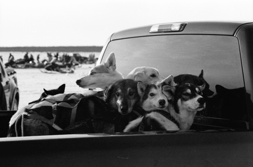 Dash dogs waiting